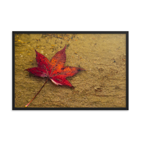 Leaf in the Rain Botanical Nature Photo Framed Wall Art Print