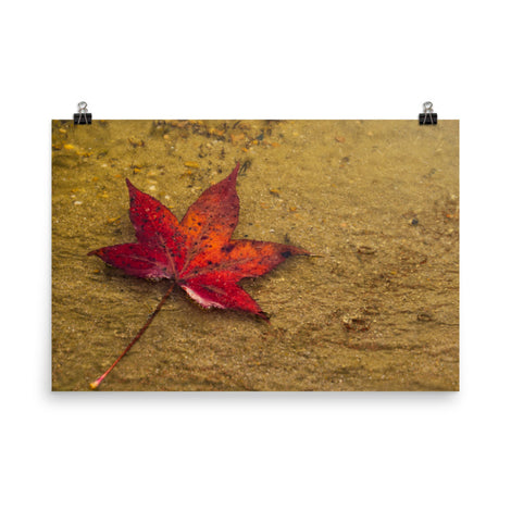 Leaf in the Rain Botanical Nature Photo Loose Unframed Wall Art Prints