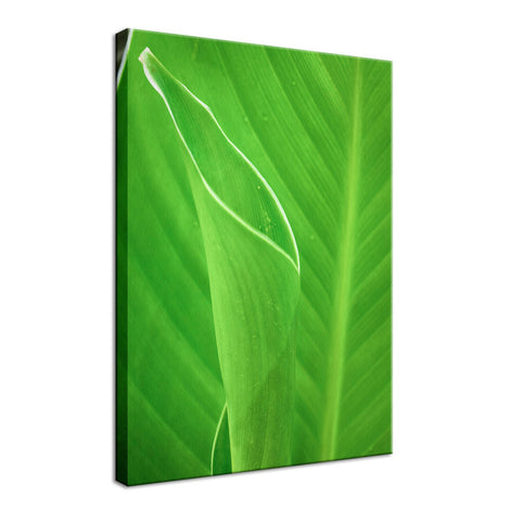Leaves Canna Lily Plant Nature / Botanical Photo Fine Art Canvas Wall Art Prints