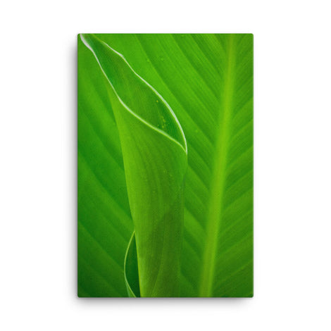 Leaves of Canna Lily Botanical Nature Canvas Wall Art Prints