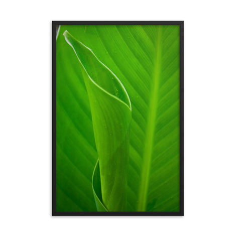 Leaves of Canna Lily Botanical Nature Photo Framed Wall Art Print