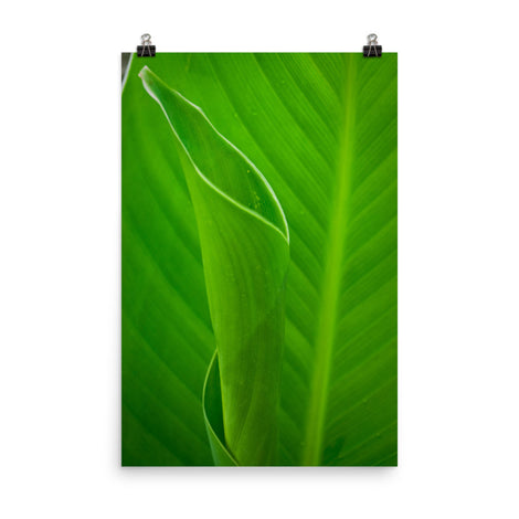 Leaves of Canna Lily Botanical Nature Photo Loose Unframed Wall Art Prints