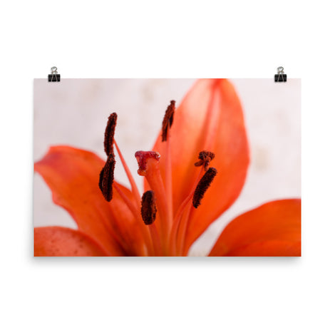 Lily Stigma Floral Nature Photo Loose Unframed Wall Art Prints