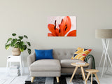 Lily Stigma Nature / Floral Photo Fine Art & Unframed Wall Art Prints - PIPAFINEART