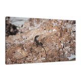 Lizard Rock Colorized Wildlife Photograph Fine Art Canvas & Unframed Wall Art Prints  - PIPAFINEART