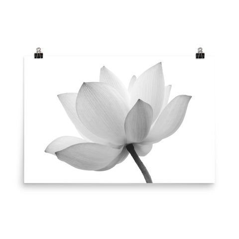 Lotus Flower Black and White Effect Floral Nature Photo Loose Wall Art Print