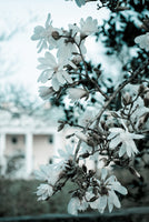 Mansion Bloom Colorized Nature Landscape Photo Fine Art Canvas & Unframed Wall Art Prints - PIPAFINEART