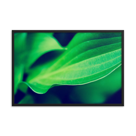 Mellow Hosta Leaves Botanical Nature Photo Framed Wall Art Print