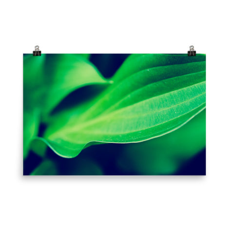 Mellow Hosta Leaves Botanical Nature Photo Loose Unframed Wall Art Prints
