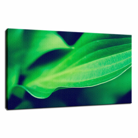 Mellow Hosta Leaves Botanical / Nature Photo Fine Art Canvas Wall Art Prints