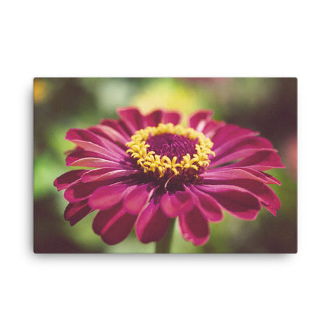 Moody Young-And-Old Age Pink Zinnia Floral Nature Canvas Wall Art Prints