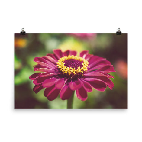 Moody Young-And-Old Age Pink Zinnia Floral Nature Photo Loose Unframed Wall Art Prints