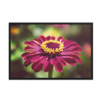 Moody Young-And-Old Age Pink Zinnia Flower Bloom Floral Nature Photo Framed Wall Art Print  - PIPAFINEART