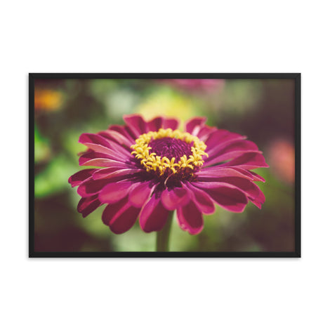 Moody Young-And-Old Age Pink Zinnia Flower Bloom Floral Nature Photo Framed Wall Art Print