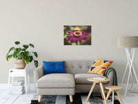 "Moody Young-And-Old Age Pink Zinnia Flower Bloom Fine Art Canvas Wall Art Prints 20"" x 30"" / Fine Art Canvas - PIPAFINEART"