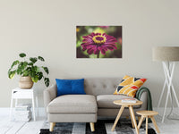 "Moody Young-And-Old Age Pink Zinnia Flower Bloom Fine Art Canvas Wall Art Prints 24"" x 36"" / Fine Art Canvas - PIPAFINEART"