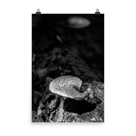 Mushroom on Log Black and White Botanical Nature Photo Loose Unframed Wall Art Prints