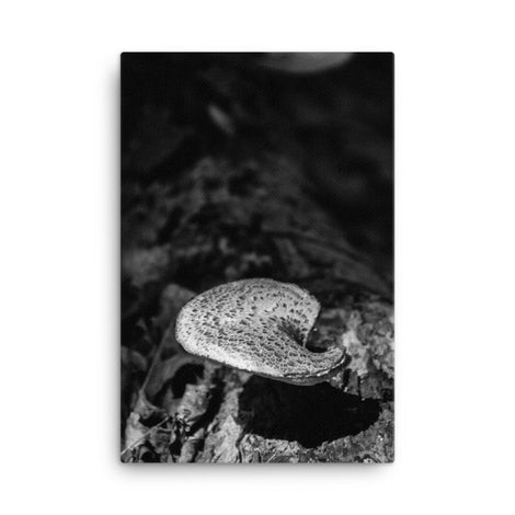 Mushroom on Log Black and White Floral Nature Canvas Wall Art Prints