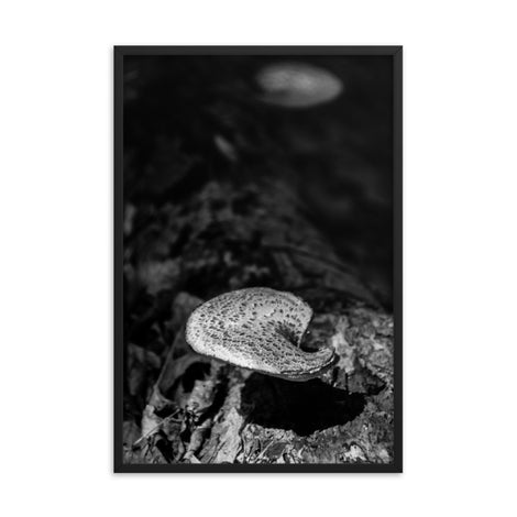 Mushroom on Log in Black and White Botanical Nature Photo Framed Wall Art Print