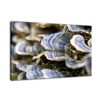 Mushrooms on Log Botanical / Nature Photo Fine Art Canvas Wall Art Prints  - PIPAFINEART