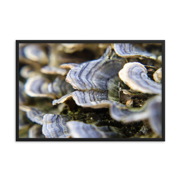 Mushrooms on Log Botanical Nature Photo Framed Wall Art Print  - PIPAFINEART