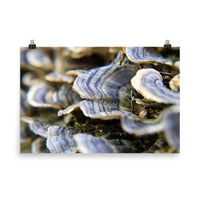 Mushrooms on Log Botanical Nature Photo Loose Unframed Wall Art Prints  - PIPAFINEART