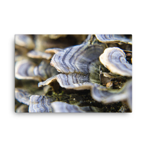 Mushrooms on Log Floral Nature Canvas Wall Art Prints