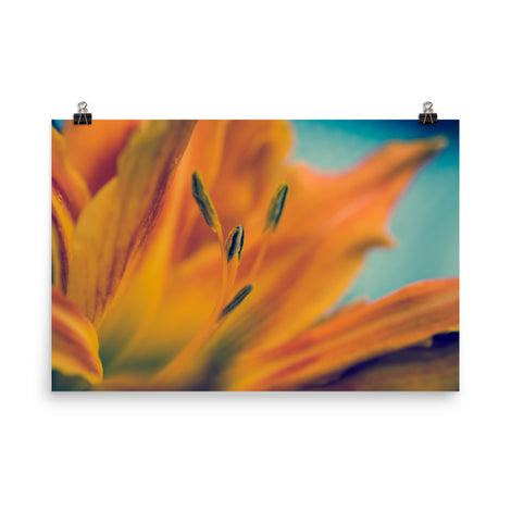 Mystical Tiger Lily Floral Nature Photo Loose Unframed Wall Art Prints