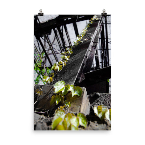 Nature Taking Over Botanical Nature Photo Loose Unframed Wall Art Prints
