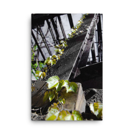 Nature Taking Over Nature Canvas Wall Art Prints