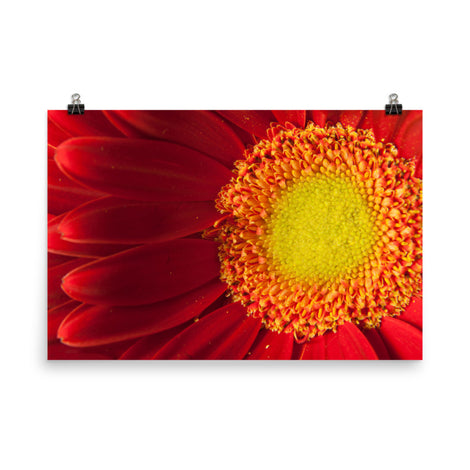 Nature's Beauty Floral Nature Photo Loose Unframed Wall Art Prints