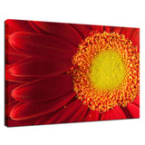 Nature's Beauty Nature / Floral Photo Fine Art Canvas Wall Art Prints  - PIPAFINEART