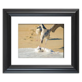 Oh That's Cold Coastal Bird Animal / Wildlife Photograph Fine Art Canvas & Unframed Wall Art Prints  - PIPAFINEART