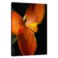Orange Canna at Longwood Nature / Floral Photo Fine Art & Unframed Wall Art Prints - PIPAFINEART