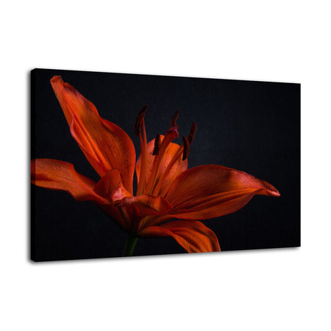 Orange Lily with Backlight Nature / Floral Photo Fine Art Canvas Wall Art Prints