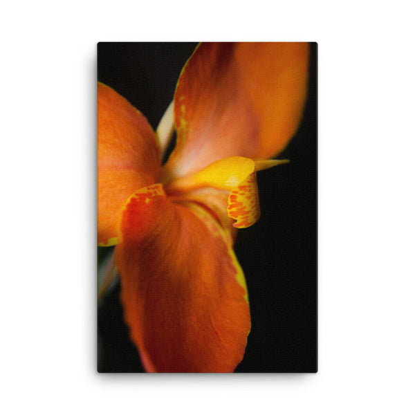 Orange Canna at Longwood Gardens Floral Nature Canvas Wall Art Prints  - PIPAFINEART