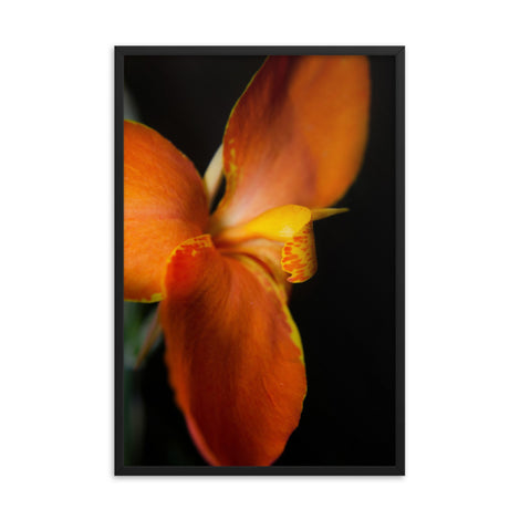 Orange Canna at Longwood Gardens Floral Nature Photo Framed Wall Art Print