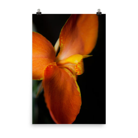 Orange Canna at Longwood Gardens Floral Nature Photo Loose Unframed Wall Art Prints
