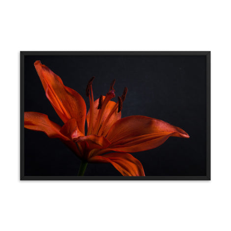 Orange Lily with Back light Floral Nature Photo Framed Wall Art Print