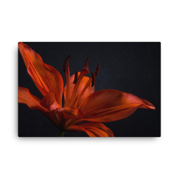 Orange Lily with Backlight Floral Nature Canvas Wall Art Prints  - PIPAFINEART