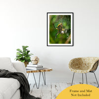 "Orb Weaver Animal / Wildlife Photograph Fine Art Canvas & Unframed Wall Art Prints 24"" x 36"" / Classic Paper - Unframed - PIPAFINEART"