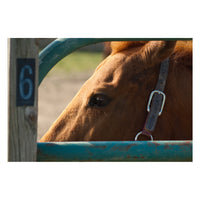 Paddock 6 Animal / Horse Photograph Fine Art Canvas & Unframed Wall Art Prints  - PIPAFINEART