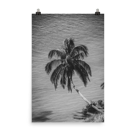 Palm Over Water Black and White Botanical Nature Photo Loose Unframed Wall Art Prints