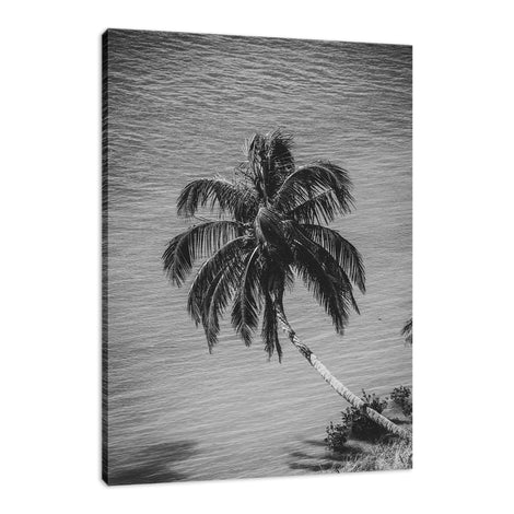 Palm Over Water Black and White Nature / Botanical Photo Fine Art Canvas Wall Art Prints