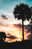Palm Tree Silhouettes and Sunset Coastal Landscape Photo Fine Art Canvas & Unframed Wall Art Prints - PIPAFINEART