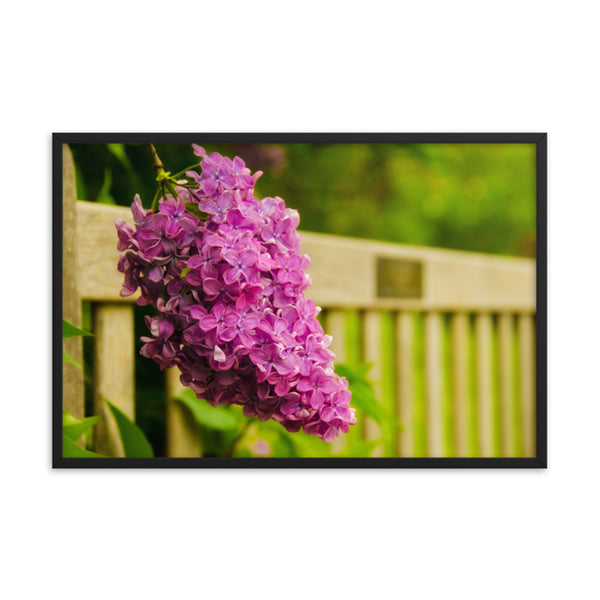 Park Bench with Lilac Floral Nature Photo Framed Wall Art Print  - PIPAFINEART