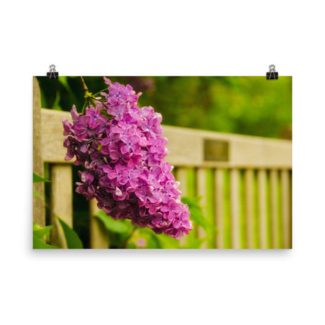 Park Bench with Lilac Floral Nature Photo Loose Unframed Wall Art Prints