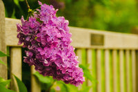 Park Bench with Lilac Nature / Floral Photo Fine Art Canvas Wall Art Prints  - PIPAFINEART