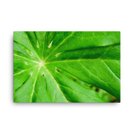 Peaceful Greenery Botanical Nature Canvas Wall Art Prints