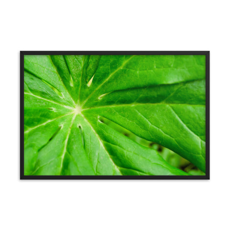 Peaceful Greenery Botanical Nature Photo Framed Wall Art Print